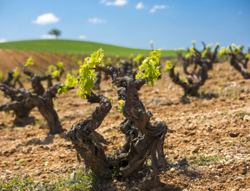 Grandes Pagos de España ofrece propuestas enoturísticas centradas en el viñedo y vinos únicos