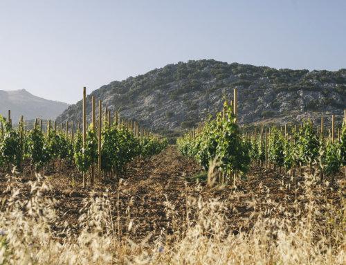 'Terroir'/'Terruño': Clave mal conocida del mejor vino