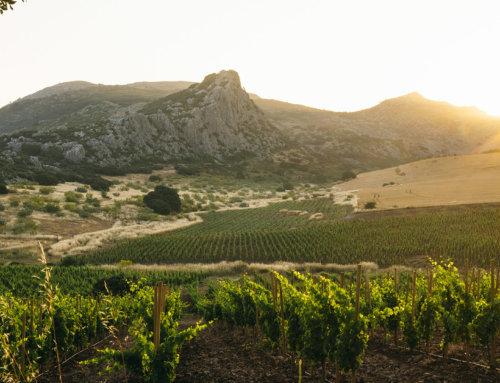 ¿Qué es un Vino de Pago?