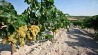Grandes Pagos de España - Great Vineyards of Spain