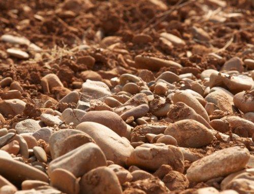 La importancia del suelo en el cultivo de la vid