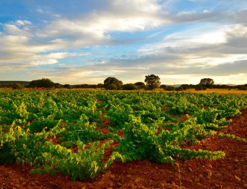 Factores geográficos y climáticos que afectan a la viticultura